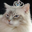Princess Ragdoll Cat  by Maria Dryfhout