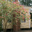 house at Westville by Sheila McCrea