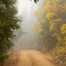 Cruising Into Autumn Fog by Bo Insogna