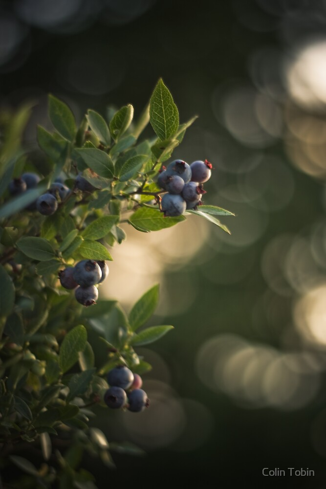 Blueberries by Colin Tobin