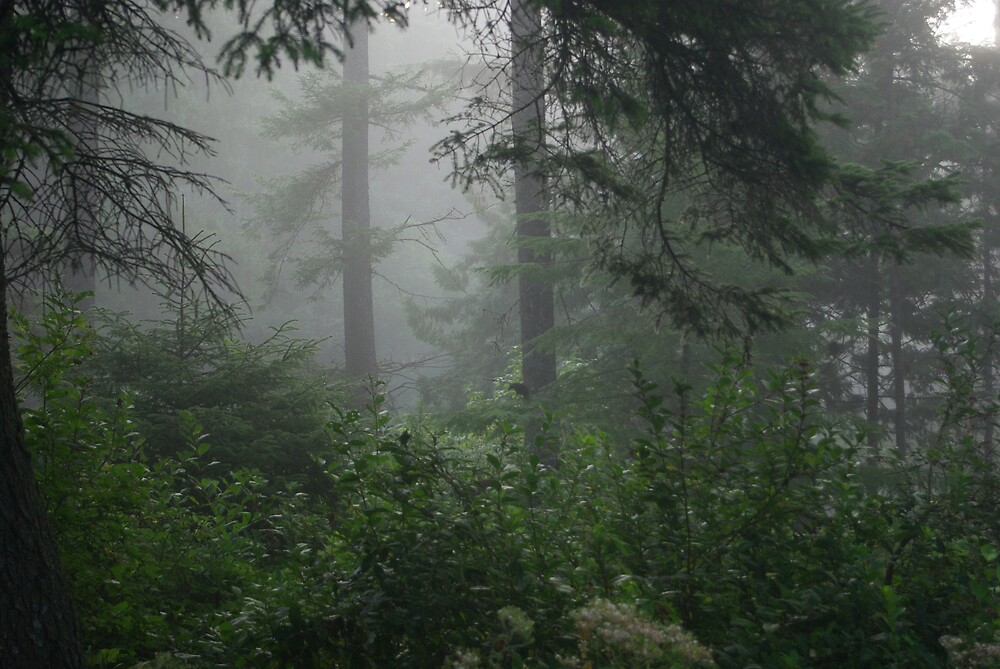 Foggy morning in the woods by Sharoncr