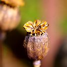 Seed Heads by Trevor Kersley