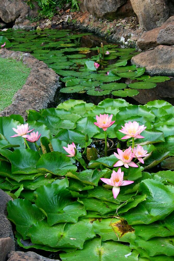 Water Lily Row by CherilynJoy