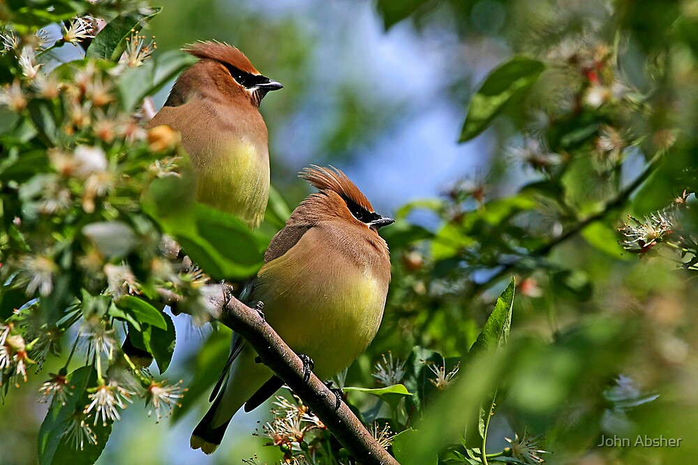 Feathered Friends by John Absher