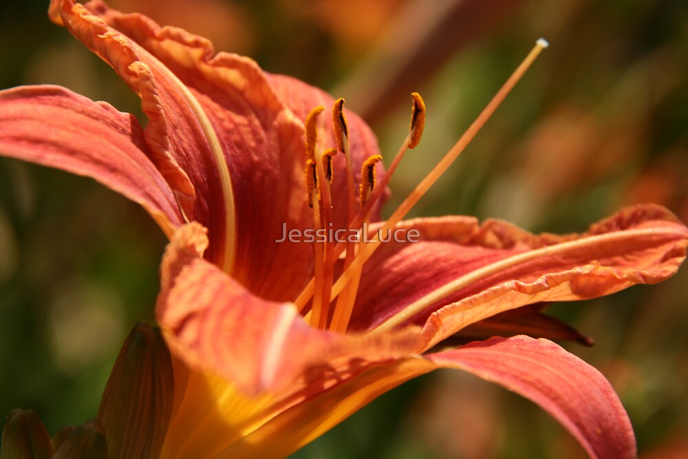 Red Flower by JessicaLuce