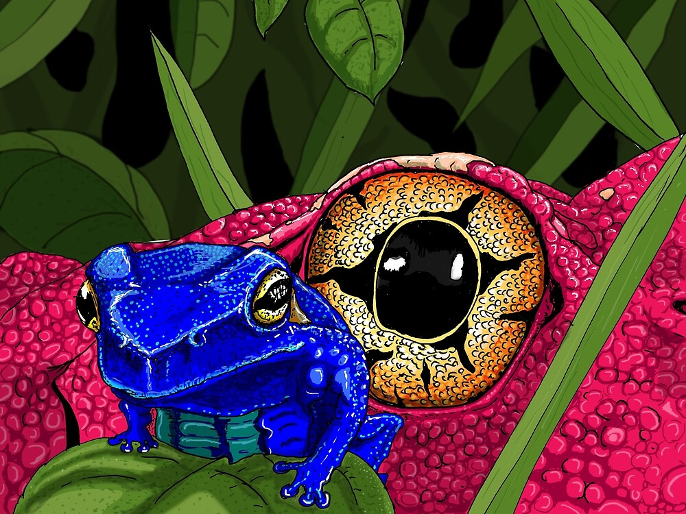frogs by Johan Malm