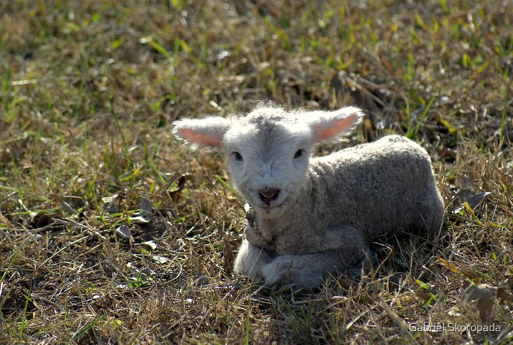 Cordero Recien Nacido | Newborn Lamb by Gabriel Skoropada