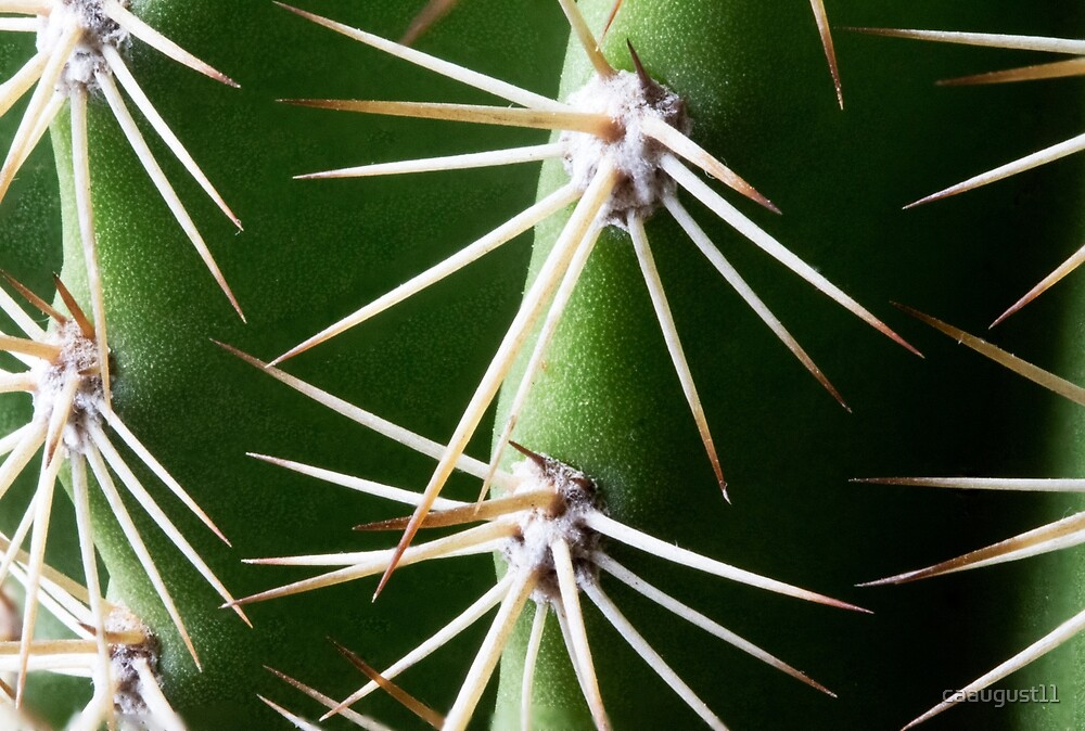 A little prickly  by caaugust11