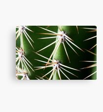 A little prickly  Canvas Print