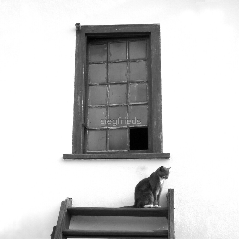 Attic cat by siegfrieds