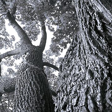 Tree Contortion by almcgreck