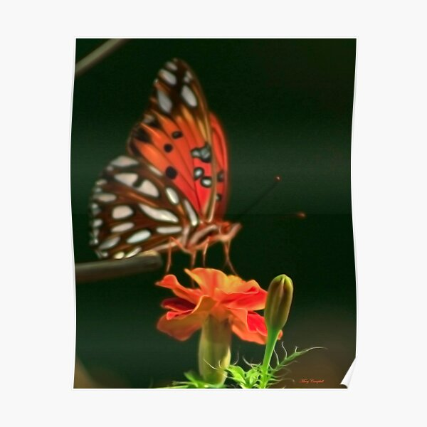 Soft Winged Flutter By Poster