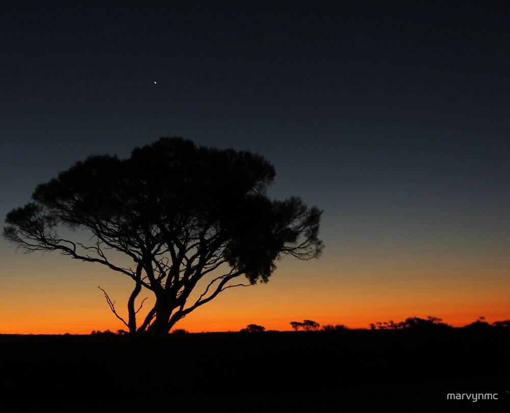 Venus Over Sunset Tree by marvynmc