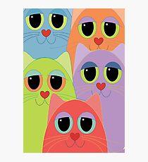 CAT FACES FIVE Photographic Print