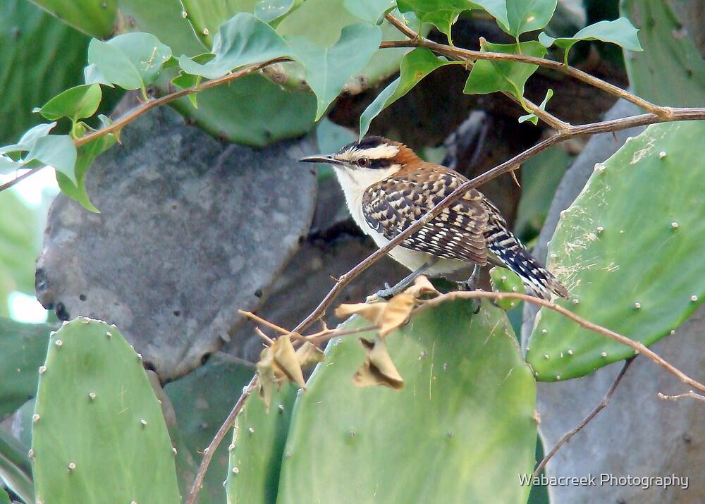 Bird on Cactus by Jocelyne Phillips