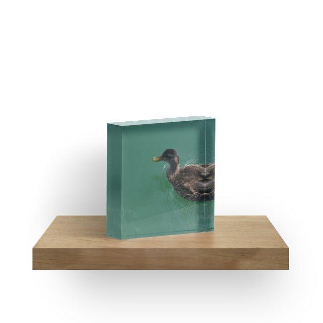 Duck by WithStarryEyes
