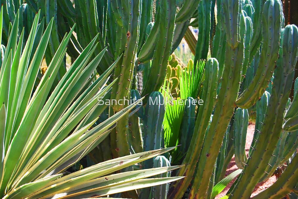 colours of cacti by Sanchita  Mukherjee