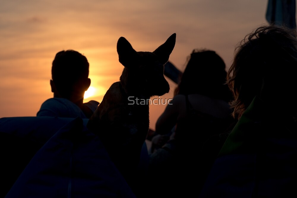 Silhouette of unrecognisable man and woman with their dog at seaside on sunset by Stanciuc