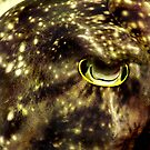 cuttlefish eye by AliceFrench7