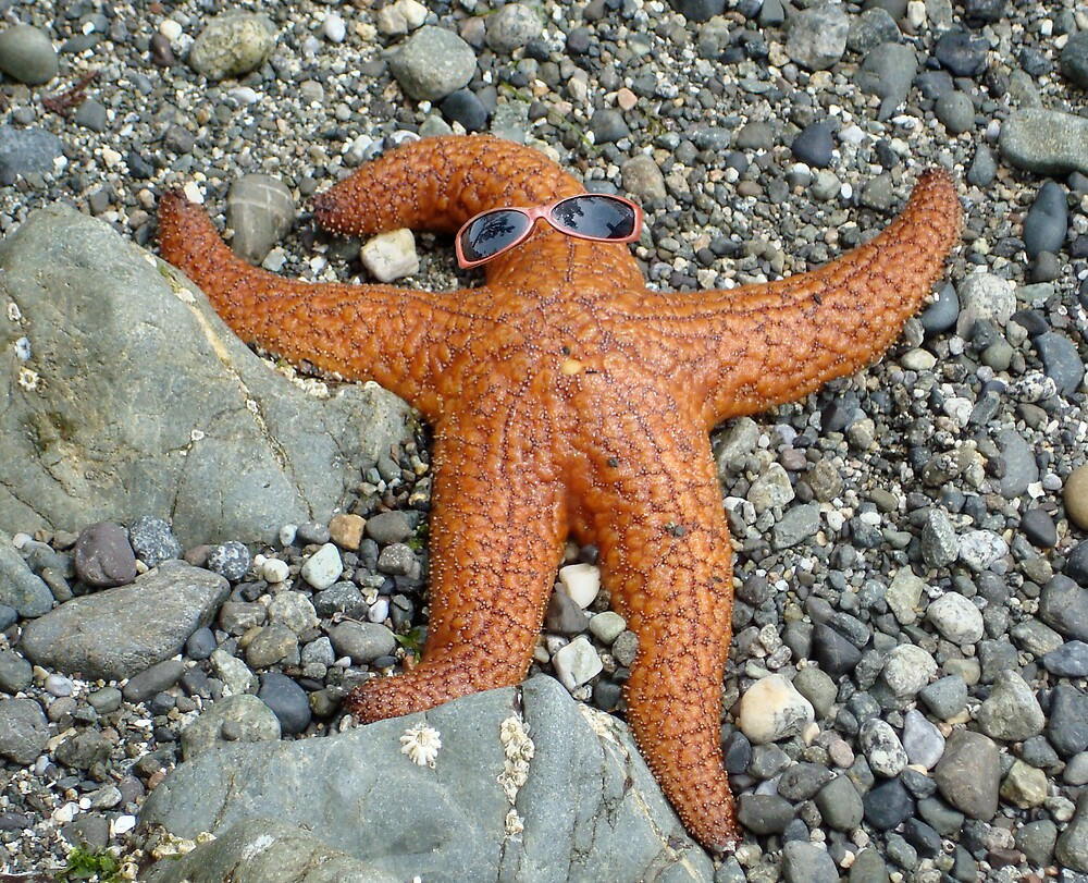 ORCAS ISLAND STAR FISH WITH SHADES by MsLiz