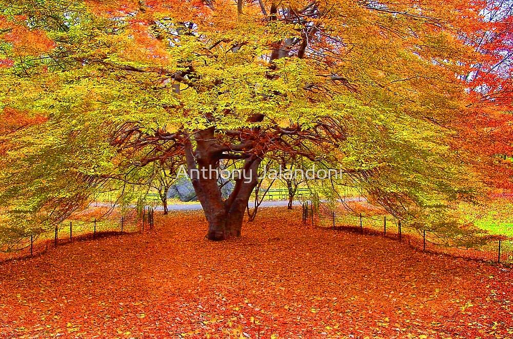 Autumn Leaves by Anthony Jalandoni