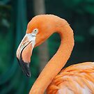flamingo by Taylor T