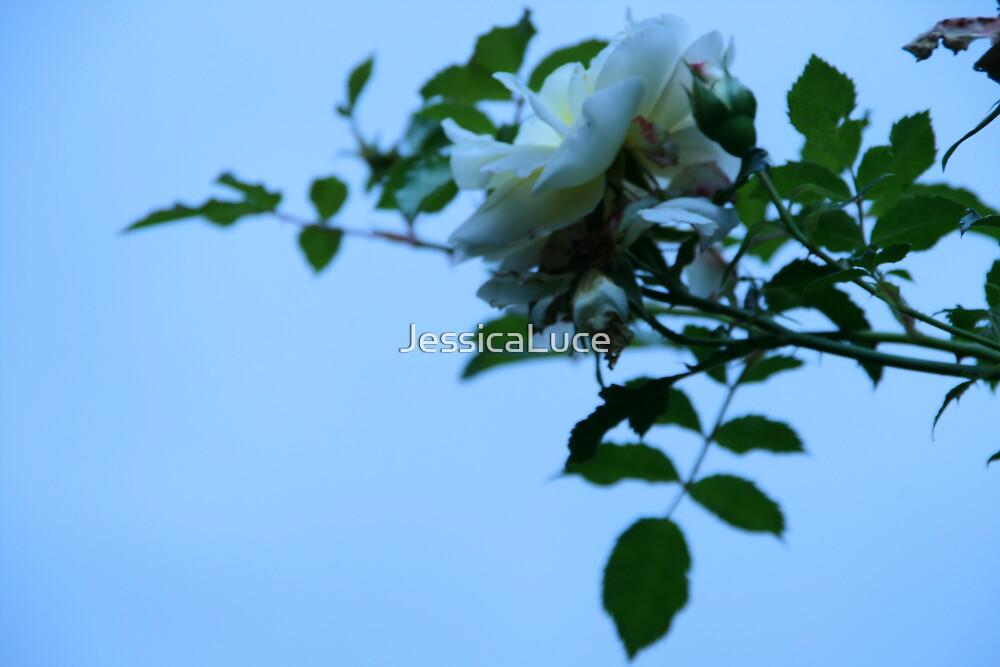 Snow flower 2 by JessicaLuce