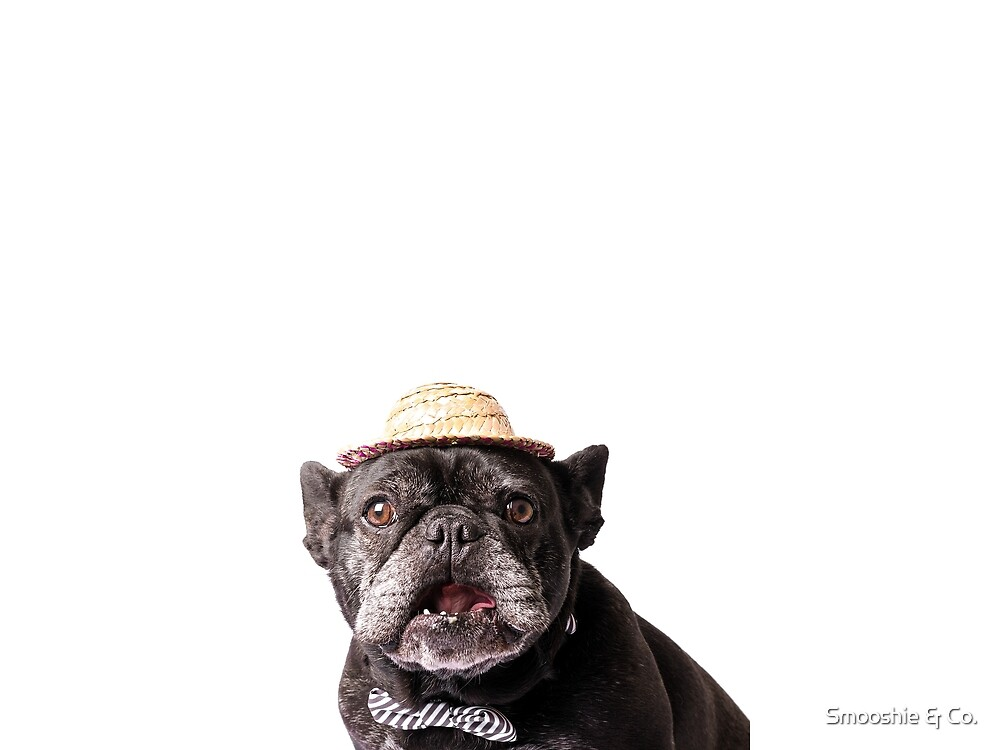Smooshie Shock by Smooshie & Co.