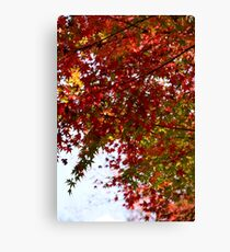 The Changing Leaves of Kyoto - Part 1 Canvas Print