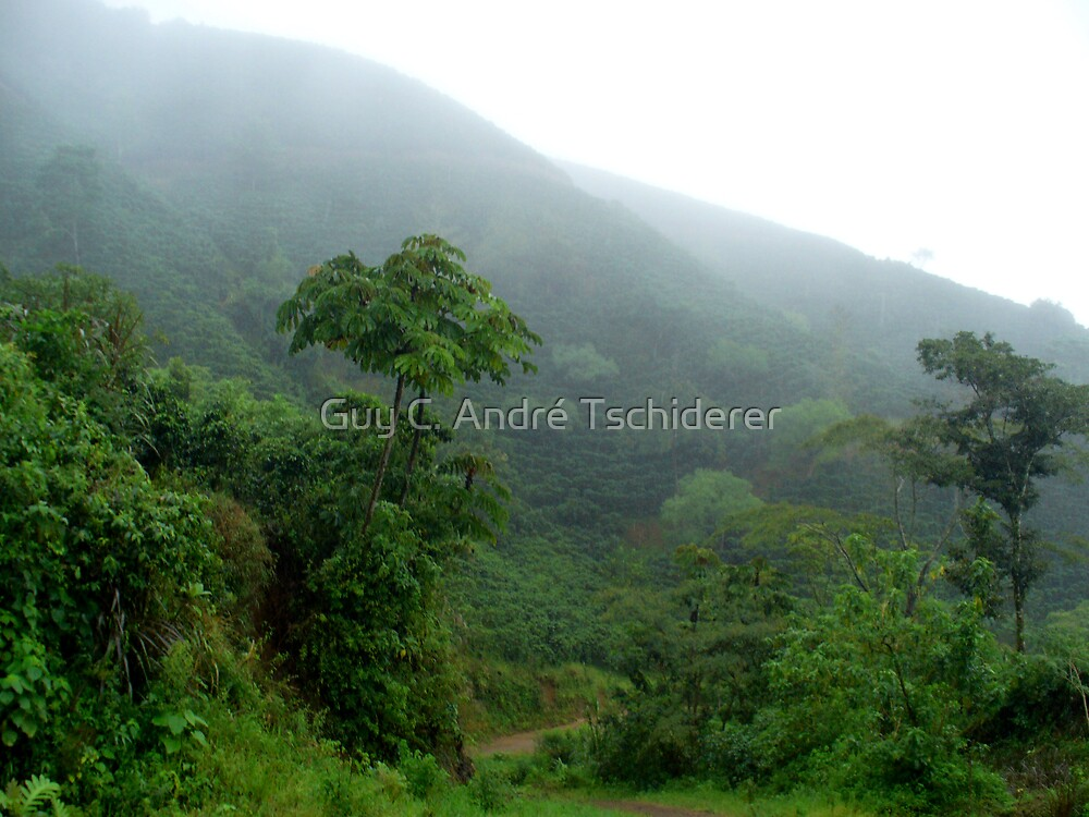 Coffee Farm in the Fog by Guy C. André Tschiderer