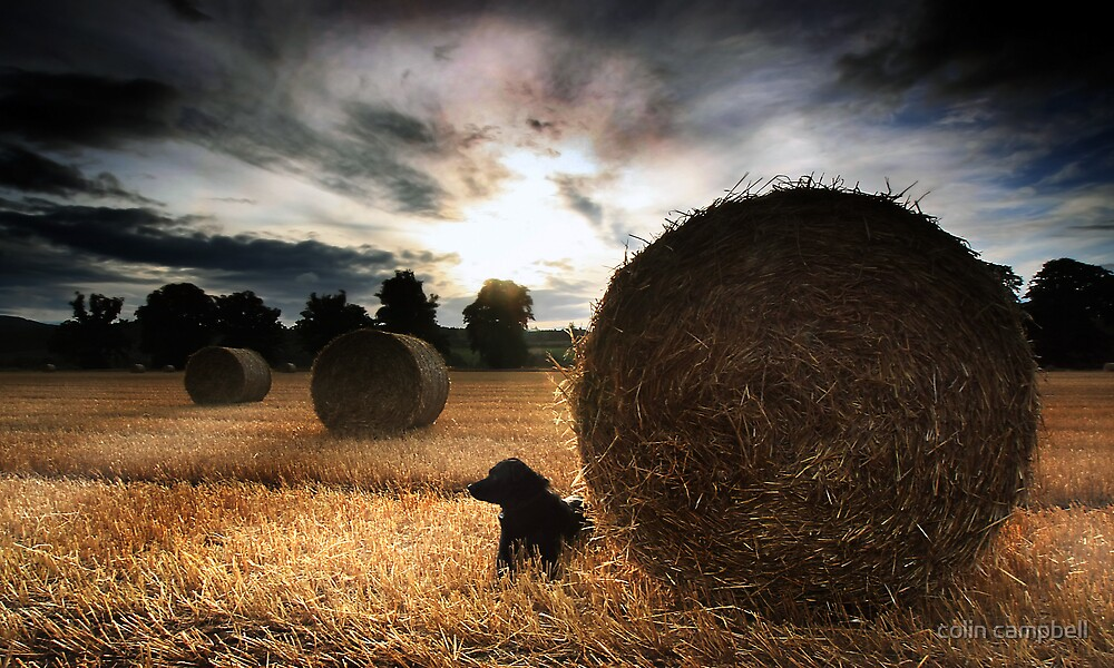 After the harvesters II by colin campbell