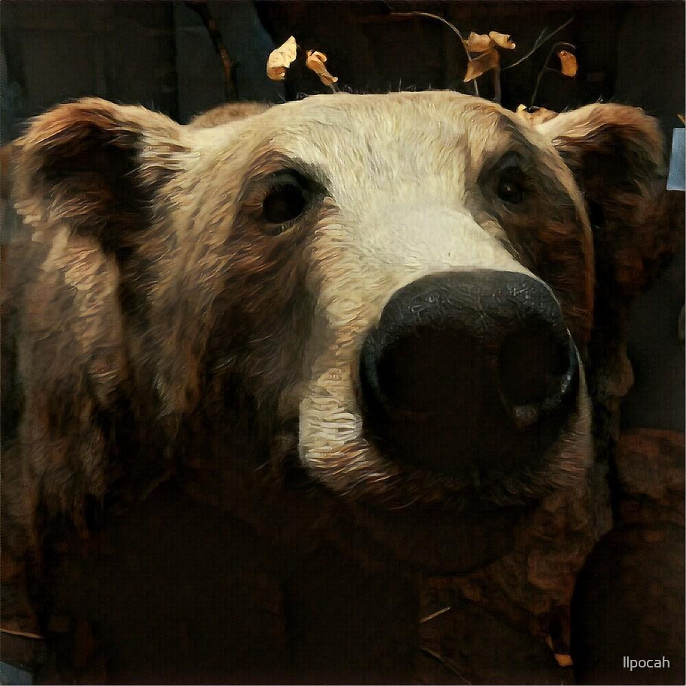 Bear by llpocah