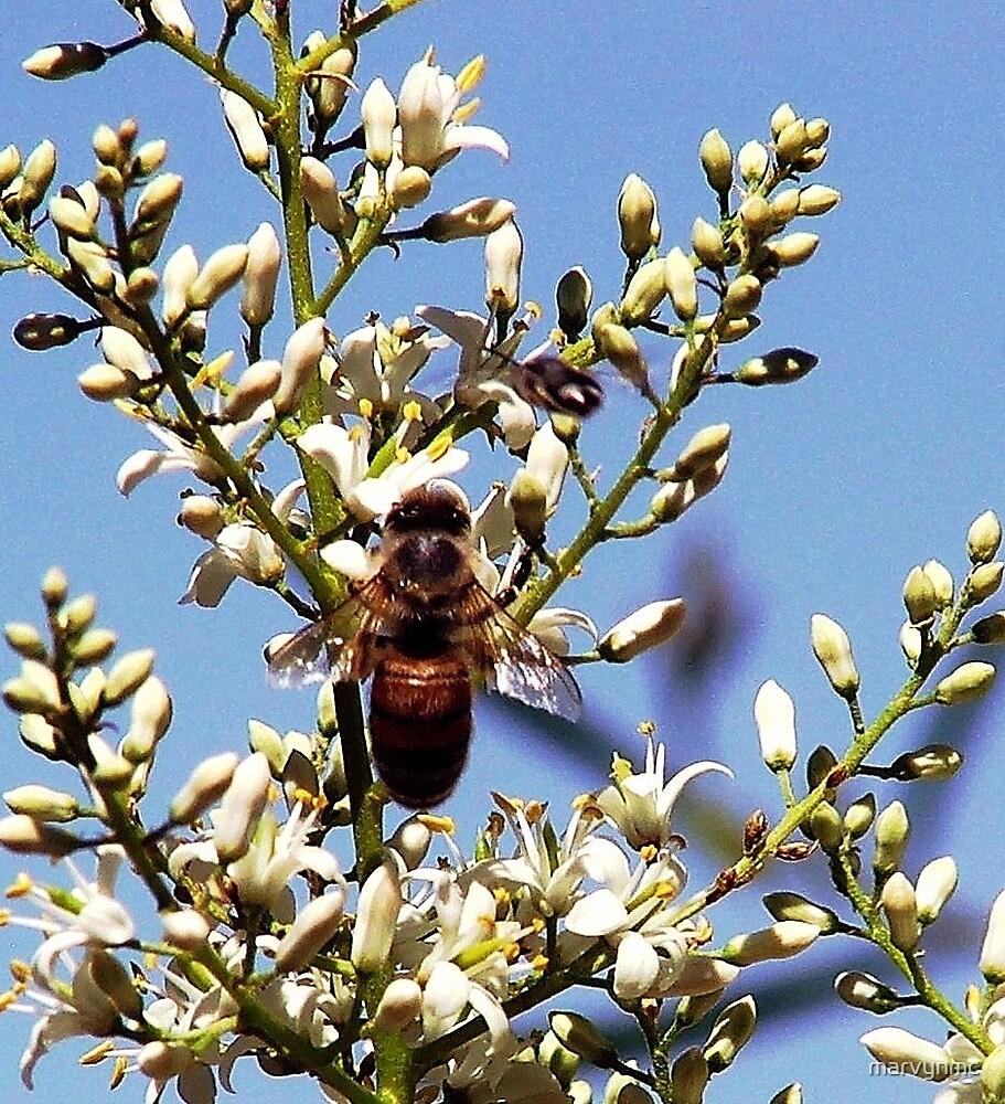 Bee Pollunation by marvynmc