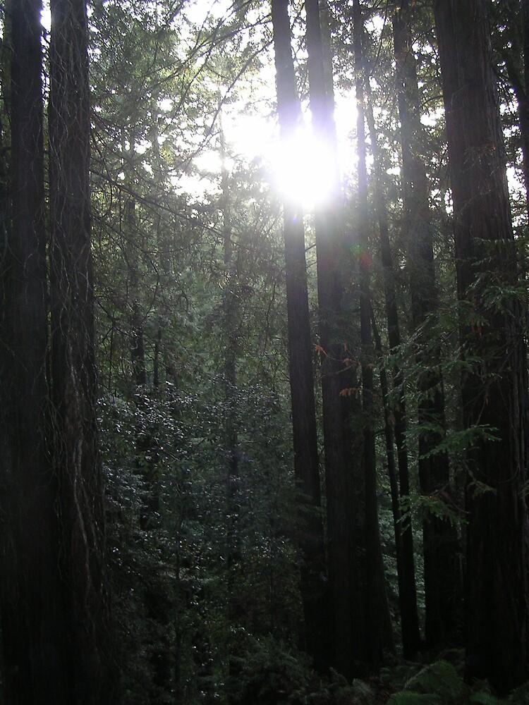 Forest Light by tunatya