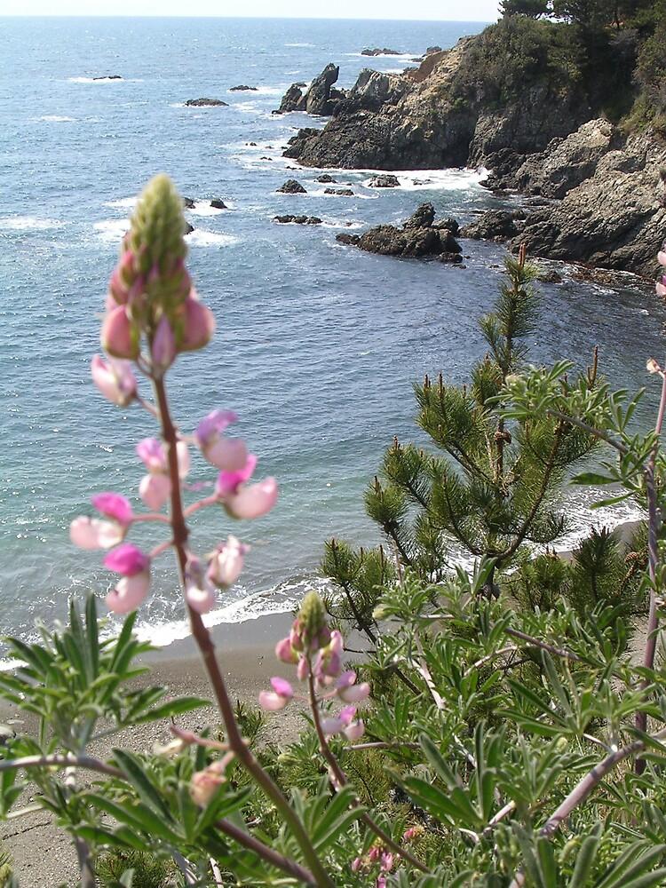 Wildflowers along the California Coast by tunatya