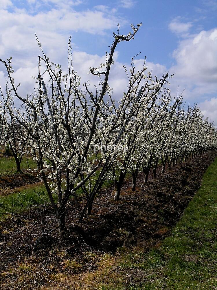 photoj, 'Spring Is Here' by photoj