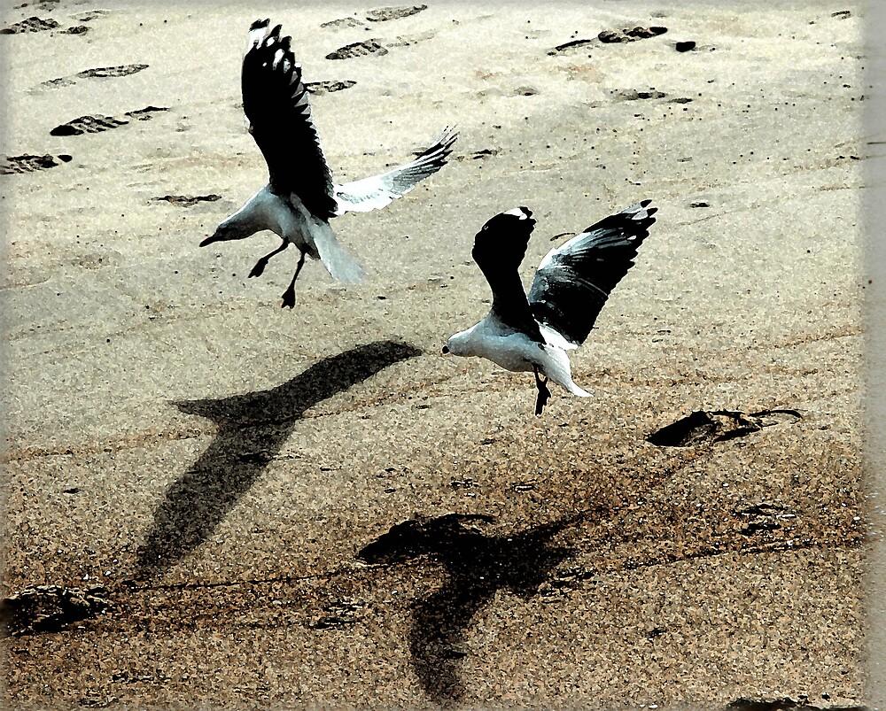 """gulls"" by Melle"