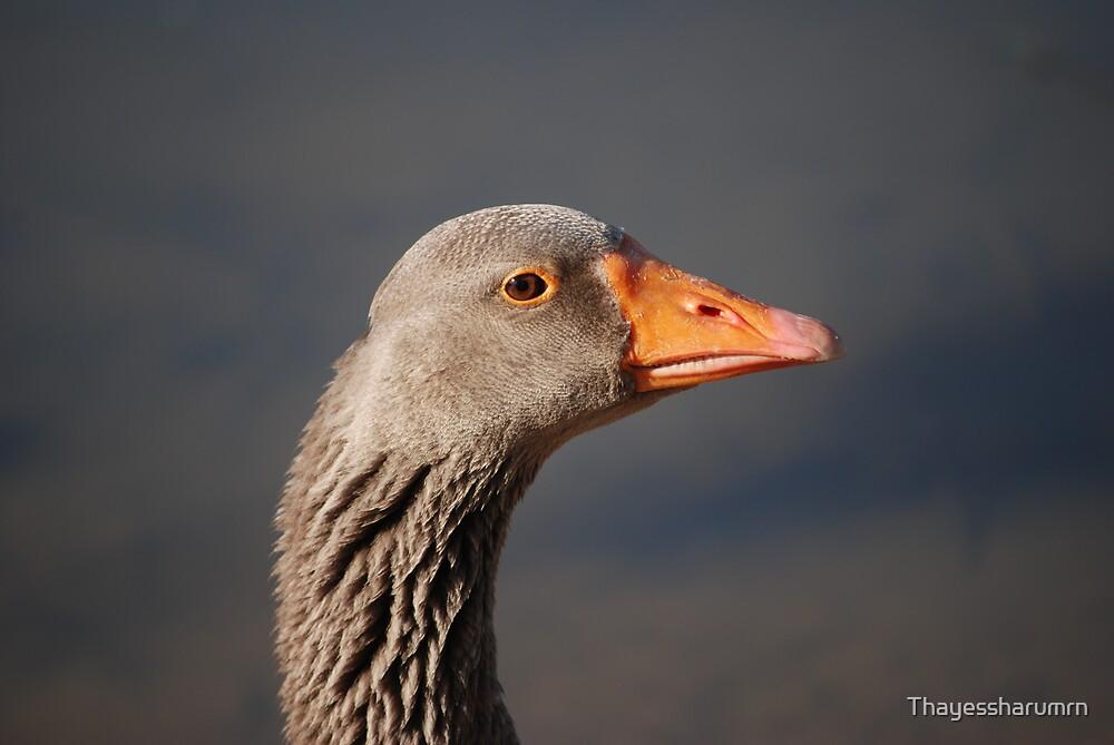 Duck Duck...GOOSE by Thayessharumrn