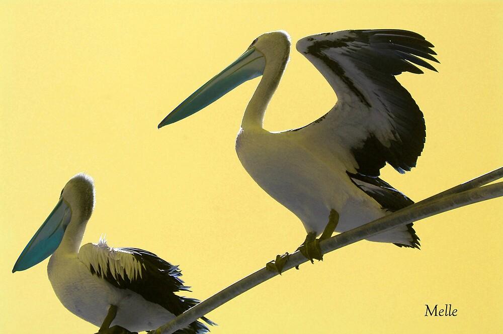 """pelicans"" by Melle"