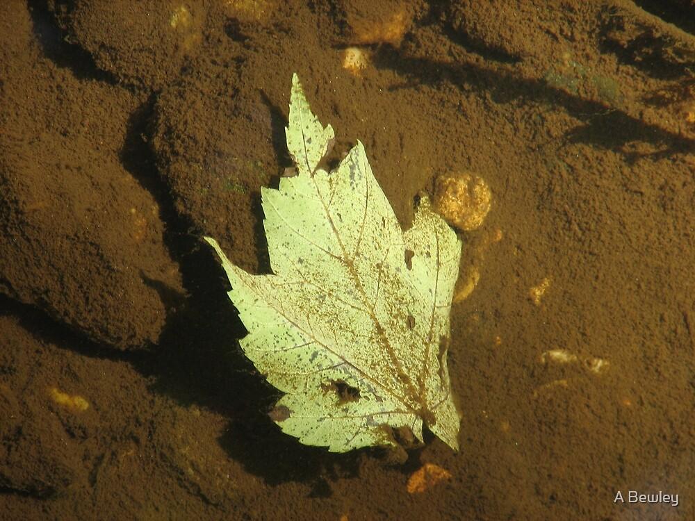 Underwater Leaf by A Bewley