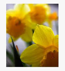 Spring time in Wales Photographic Print
