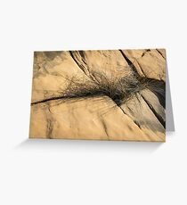 Life on Bare Rock - Wire Grass in the Cracks Greeting Card