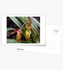 Slipper Orchid Postcards