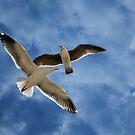 Celestial Flight by Sue  Cullumber