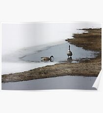 First Arrivals - Spring Thaw Poster