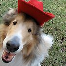 Collie in Cowoy Hat by Jan  Wall