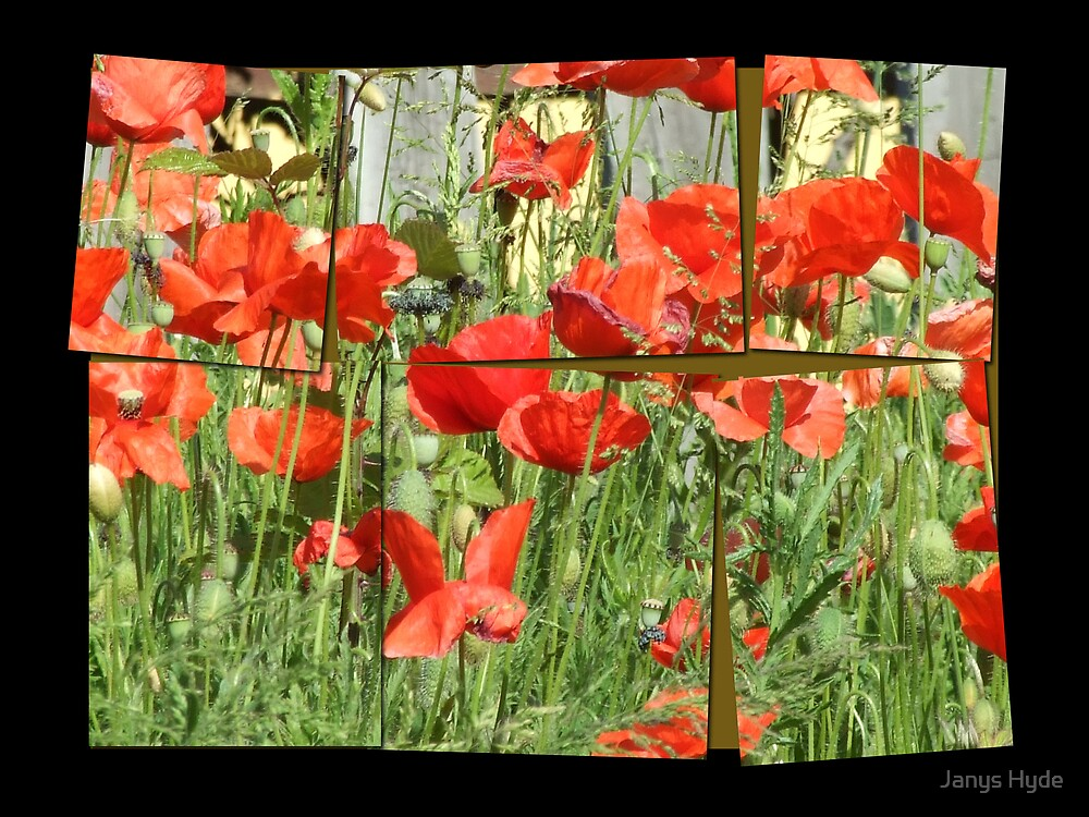 Poppies by Janys Hyde