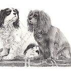 Cavalier King Charles spaniel by doggyshop