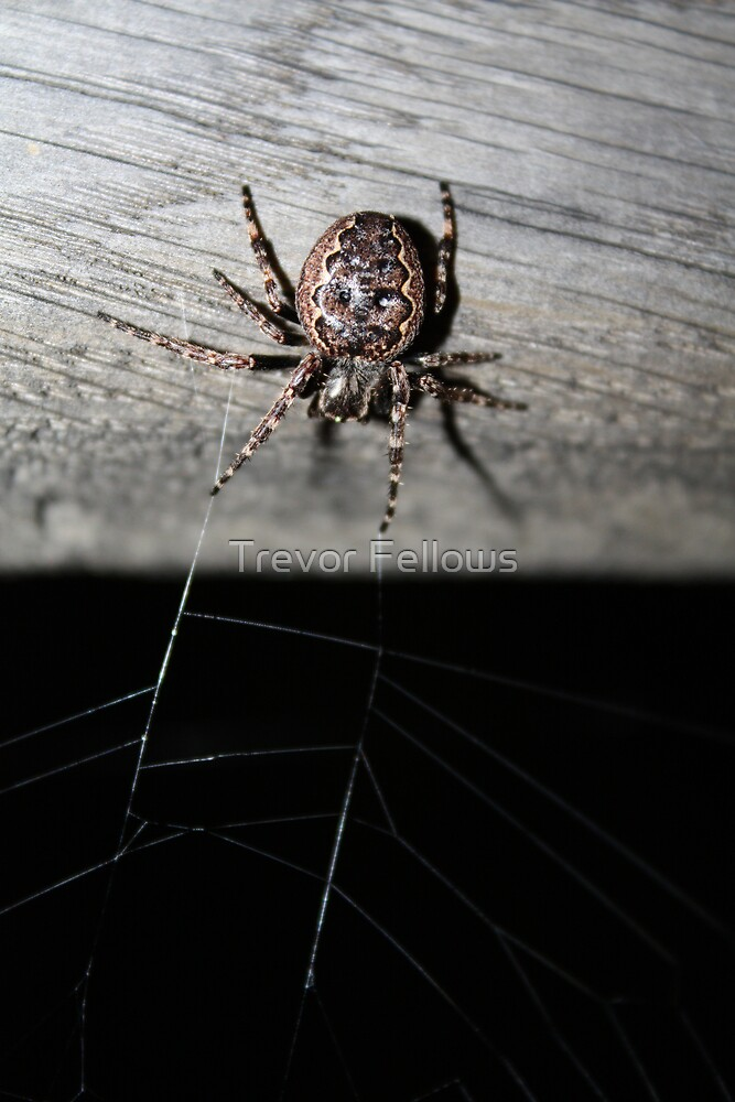 Waiting by Trevor Fellows