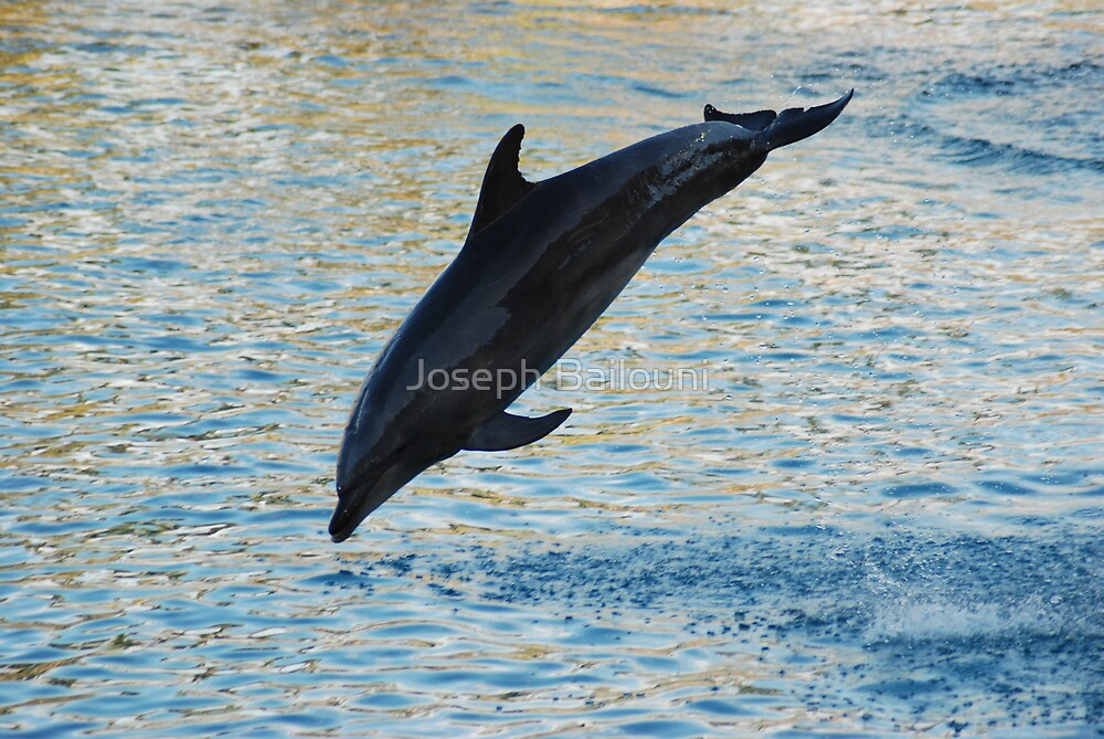 Dolphin in the air by Joseph Bailouni